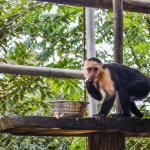 Safaricks_Zoologico_GrandOpening-150