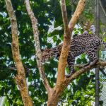 Safaricks_Zoologico_GrandOpening-167