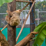 Safaricks_Zoologico_GrandOpening-189