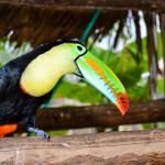 Safaricks_Zoologico_GrandOpening-3