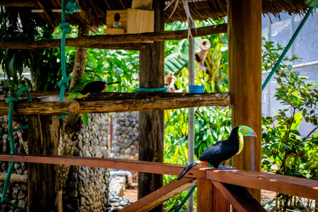 Safarick's Zoo